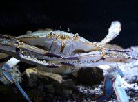 この画像は、サイトの記事「『釣りいろは カニ』 ネットで話題 YouTube公式動画ご紹介!」のイメージ写真画像として利用しています。