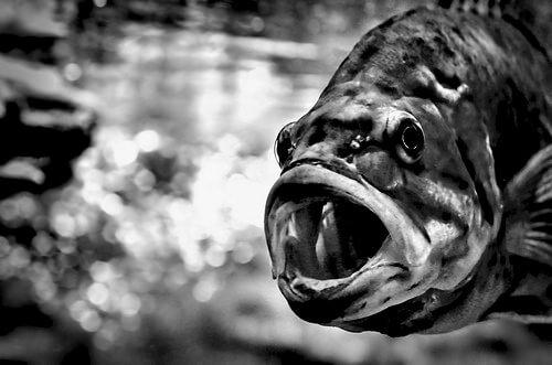 この画像は、サイトの記事「『釣りよかでしょう バス』 ネットで話題 YouTube公式動画ご紹介!」のイメージ写真画像として利用しています。