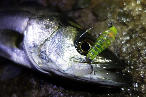 この画像は、サイトの記事「『釣りビジョン シーバス』 ネットで話題 YouTube公式動画ご紹介!」のイメージ写真画像として利用しています。
