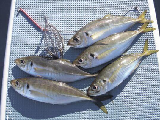 この画像は、サイトの記事「アジ 釣り 締め方 ネットで話題 魚釣り専門 YouTube注目無料視聴動画ご紹介!」のイメージ写真画像として利用しています。