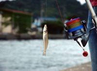 このこの画像は、サイトの記事「インチク 釣り方 ネットで話題 魚釣り専門 YouTube注目無料視聴動画ご紹介!」のイメージ写真画像として利用しています。画像は、サイトの記事「キス釣り 釣り方 ネットで話題 魚釣り専門 YouTube注目無料視聴動画ご紹介!」のイメージ写真画像として利用しています。