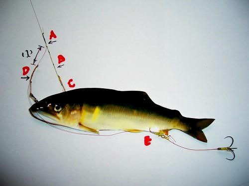この画像は、サイトの記事「鮎釣り 仕掛け ネットで話題 魚釣り専門 YouTube注目無料視聴動画ご紹介!」のイメージ写真画像として利用しています。