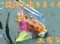 この画像は、サイトの記事「『釣りスギ四平 エギング』 ネットで話題 YouTube公式動画ご紹介!」のイメージ写真画像として利用しています。