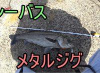 この画像は、サイトの記事「『ふくまる大将釣り動画 シーバス』 ネットで話題 YouTube公式動画ご紹介!」のイメージ写真画像として利用しています。