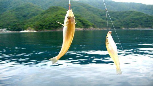 この画像は、サイトの記事「キス 釣り ネットで話題 魚釣り専門 YouTube注目無料視聴動画ご紹介!」のイメージ写真画像として利用しています。