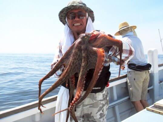 この画像は、サイトの記事「マダコ釣り 東京湾 ネットで話題 魚釣り専門 YouTube注目無料視聴動画ご紹介!」のイメージ写真画像として利用しています。