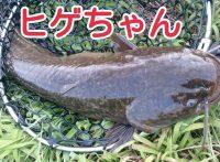 この画像は、サイトの記事「『井嶋あきら ナマズ』 ネットで話題 YouTube公式動画ご紹介!」のイメージ写真画像として利用しています。