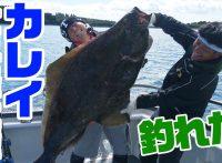 この画像は、サイトの記事「『釣りいろは アラスカ』 ネットで話題 YouTube公式動画ご紹介!」のイメージ写真画像として利用しています。